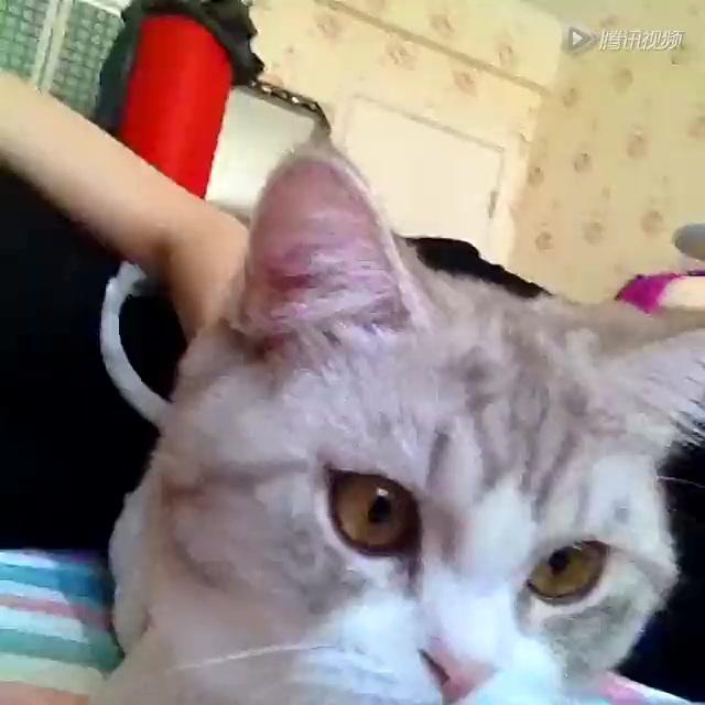 超可爱小猫咪