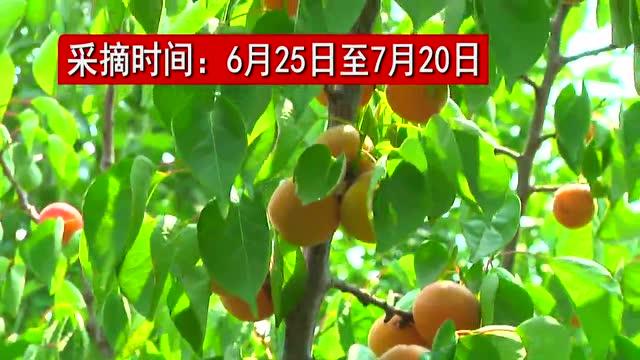 弘森生态山庄图片