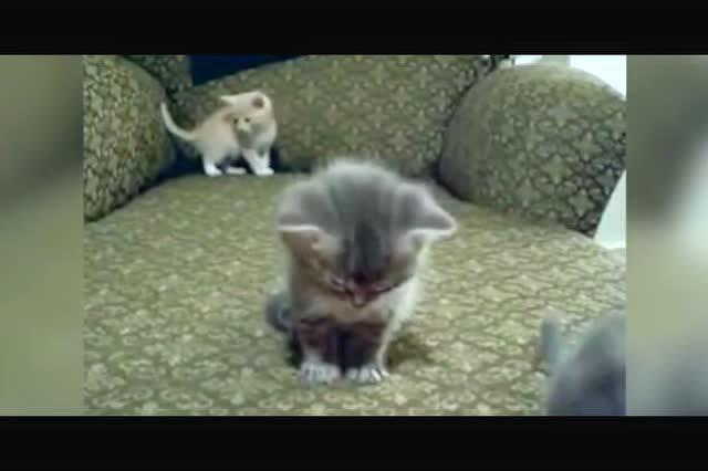 瞌睡虫来了!可爱的小猫一直点头好可爱
