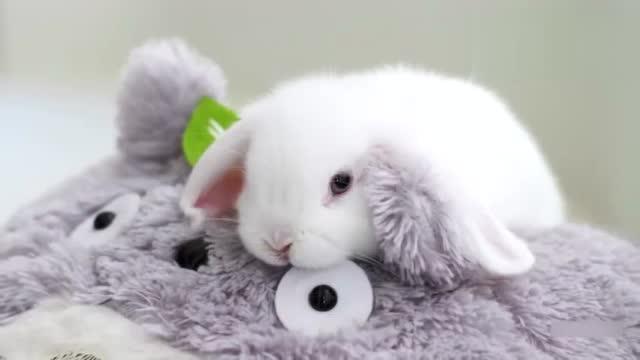 超萌超可爱的小兔子 你确定不要吸吗?就你了异萌君 萌