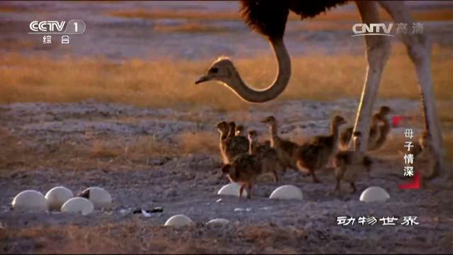 动物世界 母爱的伟大