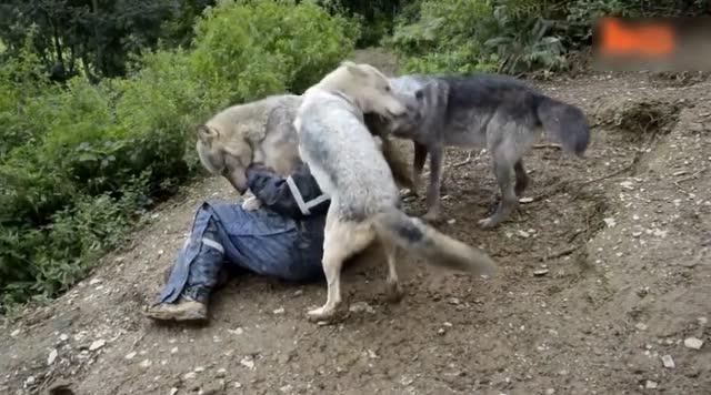 霸气黑白动物图片狼
