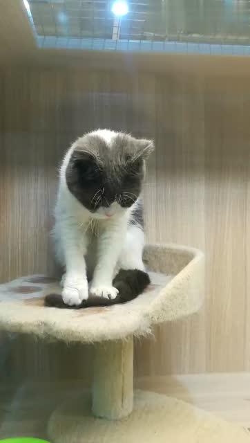 沐七城的秒拍视频 路遇小动物 踩尾巴的小猫咪 光着一个小脚丫
