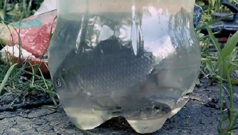 一个塑料瓶做陷阱 牛人自制捕鱼神器