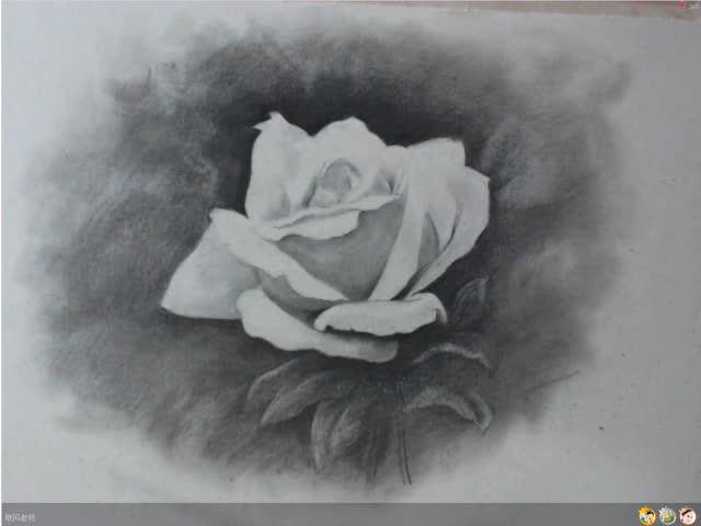 素描零基础入门教程之素描花卉玫瑰 中央美院唯风老师