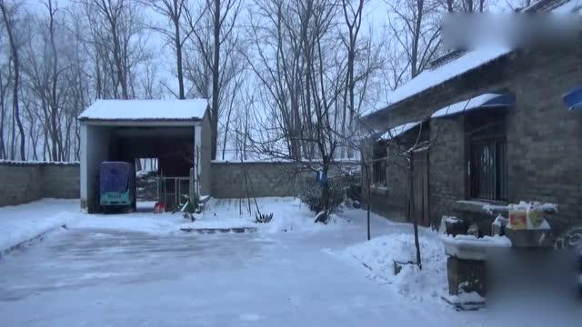 农村老家下雪真是不赖,冬天麦子被雪盖了三层,来年丰收呀