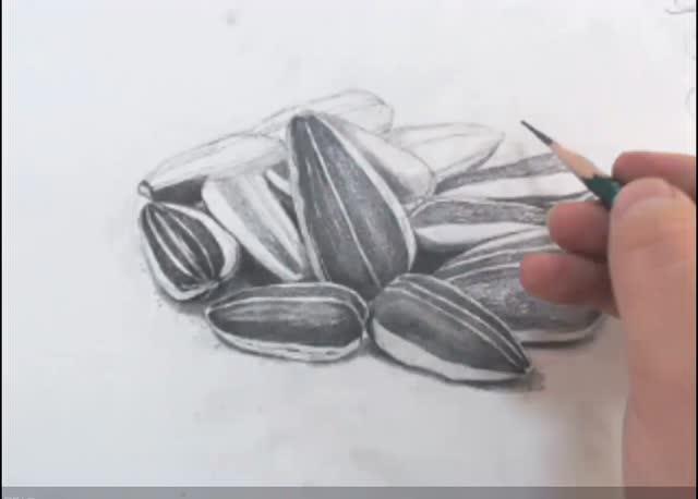 素描零基础素描入门 安德烈绘画 中央美院周磊老师 美食香瓜子