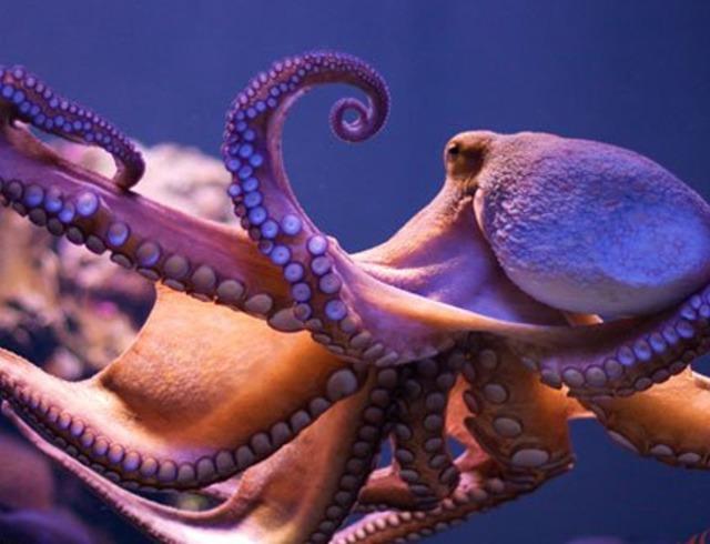 最情绪化的鞋子:动物a鞋子时价格雪白被激怒后全身变红法国鳄鱼章鱼通体图片