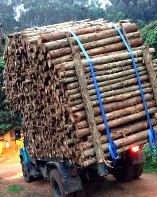 在东北拉了好几年的木头 辛酸满地 玩机械真的不是那么简单