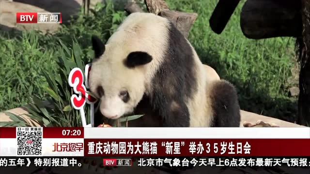 """重庆动物园为大熊猫""""新星""""举办35岁生日会"""