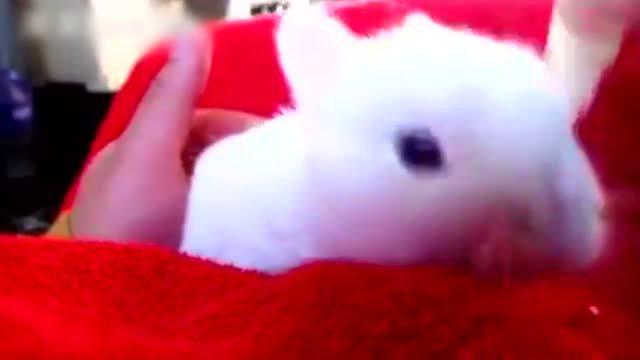 给刚出生的小兔子喂奶 萌炸了 亮点是那个小瓶子!
