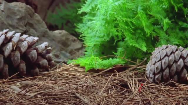 你注意过蘑菇的生长过程吗?让人看着好舒服