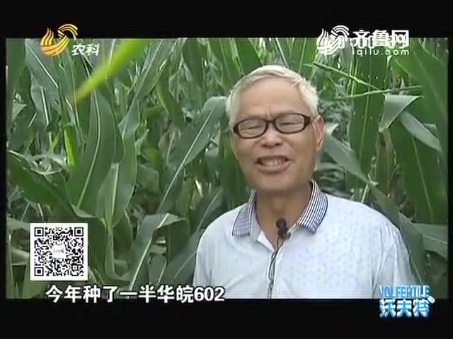 """【""""农大肥业""""杯2016山东粮王大赛】刘彦森称稳扎稳打促增产"""
