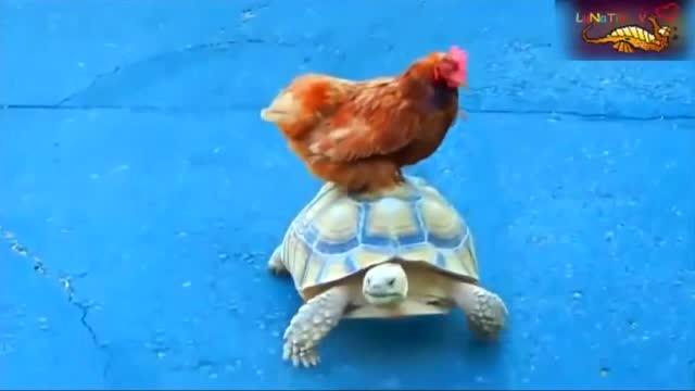 爆笑动物:有趣的动物的搞笑视频