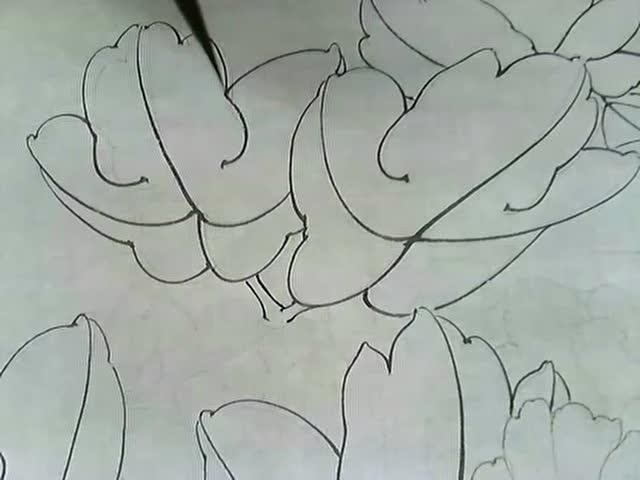 二乔玉兰手绘线稿