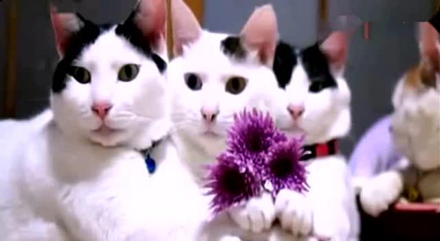 各种可爱动物搞笑视频集