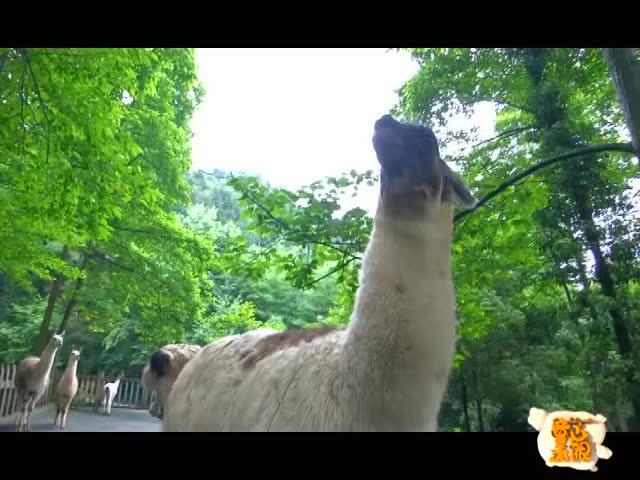 扎佐野生动物园