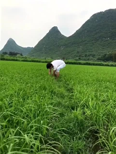 田里的风景