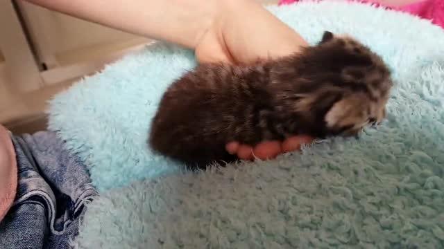 长了两个鼻子,两个嘴和三只眼睛,奇迹小猫被国外网友收养了