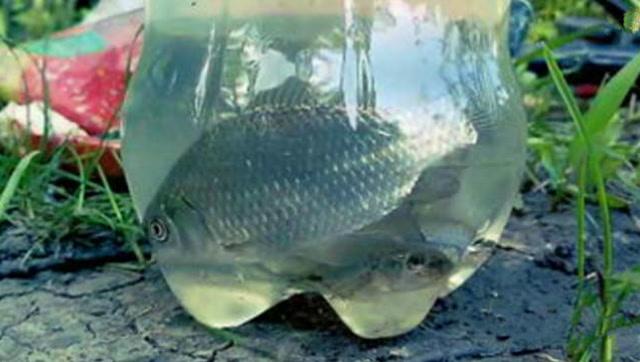 用塑料瓶做捕鱼陷阱,第二天满满的全是鱼