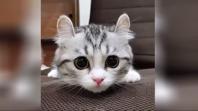 萌死人不偿命的小奶猫
