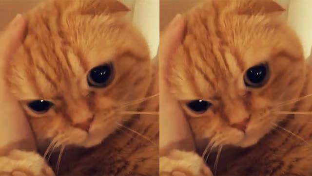 可爱小猫咪这模样,好像受了委屈的小孩的表情啊