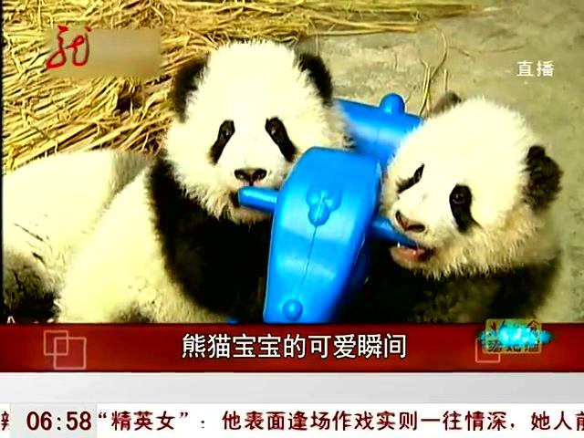 熊猫宝宝的可爱瞬间 - 新闻 - 3023视频 - 3023.com