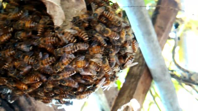 土蜂明巢,一个千分之一概率的蜜蜂巢穴