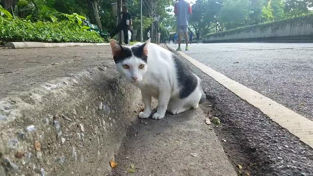 公园一只惬意猫 姿势酸爽看风景