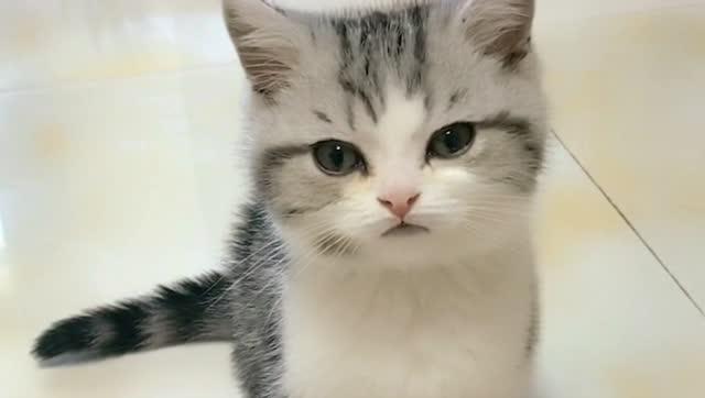 高傲的小猫咪生气之后转身就走