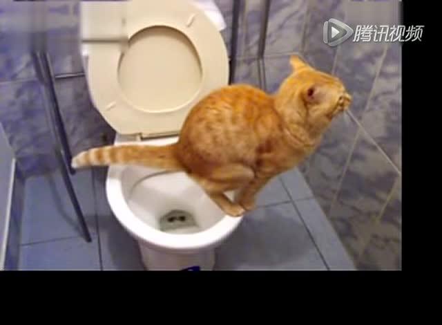拉屎视屏_视频: 猫蹲马桶拉屎