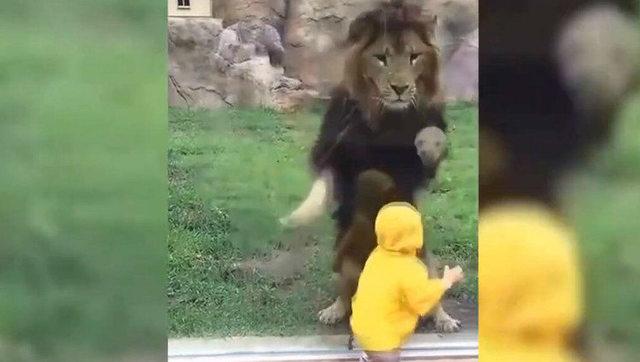 吓坏宝宝了!实拍动物园动物见到小孩子的反应!