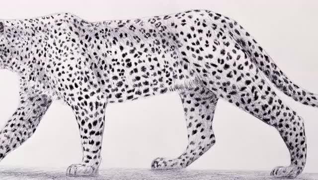 素描,牛人画家手绘豹子,画的真好