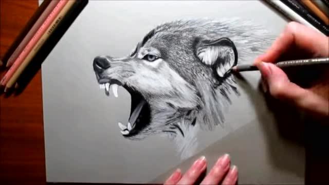 彩色铅笔手绘 一只饿狼头像