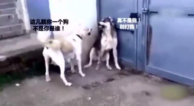 小狗vs大猫,狗狗你瞅啥,再瞅一下试试图片