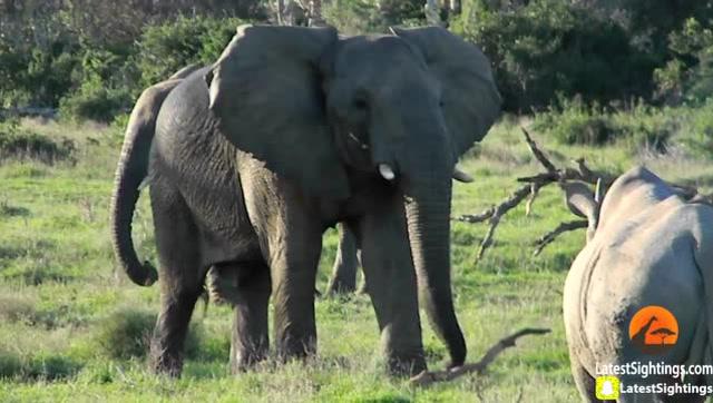 壁纸 大象 动物 640_362