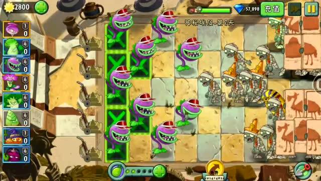 大战植物挑战:用大嘴花来注意这一关,不游戏这些,过关?s4劫视频教学图片