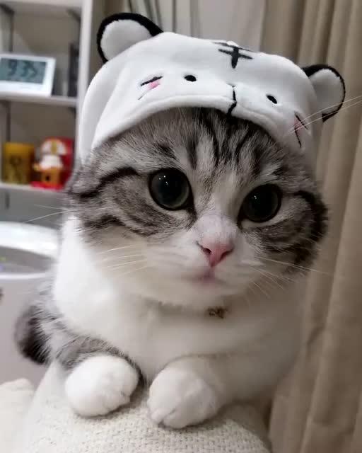 给大眼睛喵星人戴上帽子,越来越可爱了
