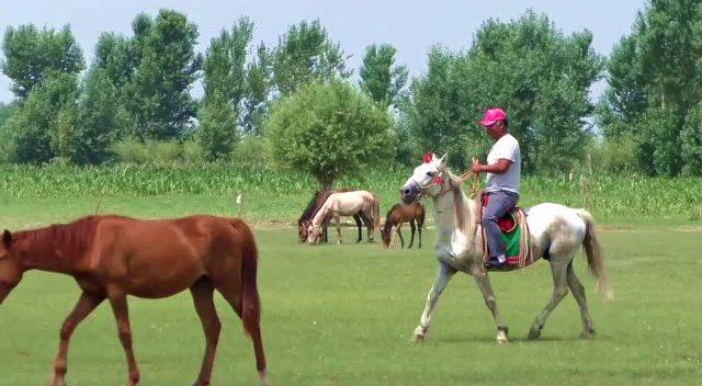 蒙语歌曲《雕花的马鞍》——莫德格 扎鲁特旗