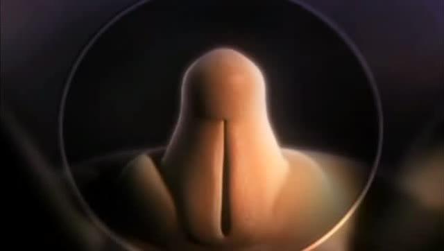 妊娠四个月胎儿的性别清晰可见,一个向外张一个往里张图片