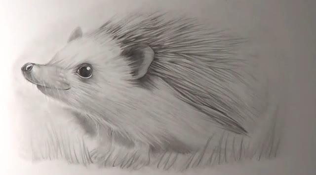 素描铅笔绘画,如何画一只可爱的小刺猬
