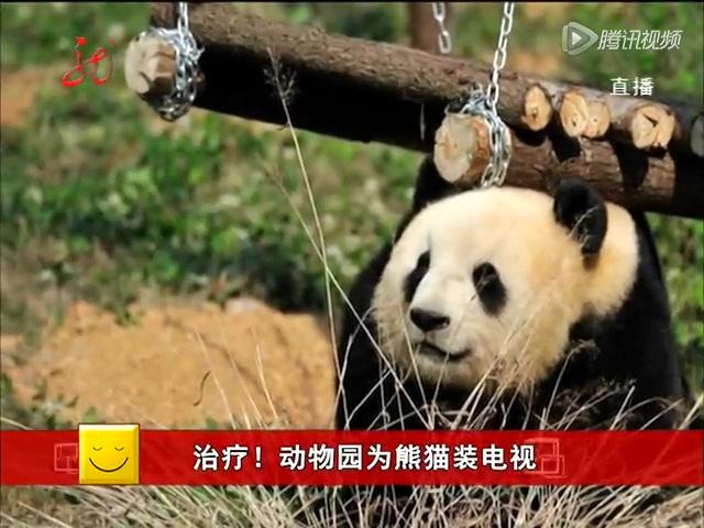 治疗 动物园为熊猫装电视