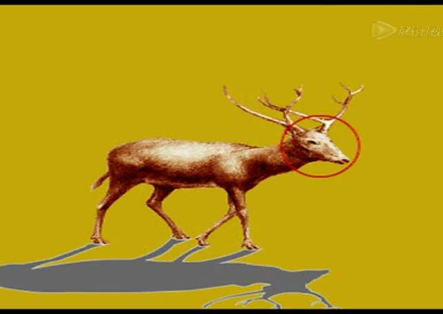 四不像动物 麋鹿的详细介绍