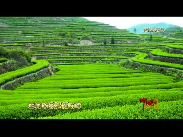 黄梅戏之黄梅采茶调图片