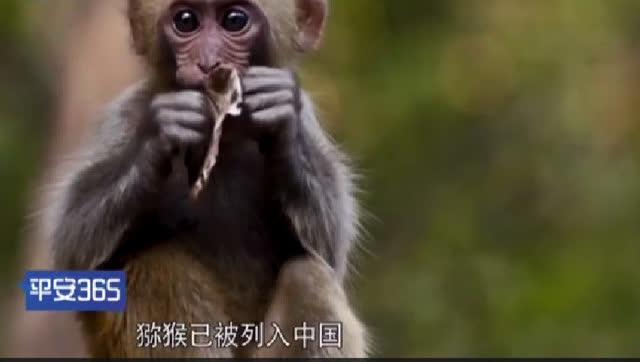 交警救了这一群猕猴!运输国家保护动物是不允许的
