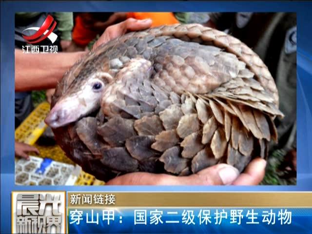新闻链接 穿山甲——国家二级保护野生动物