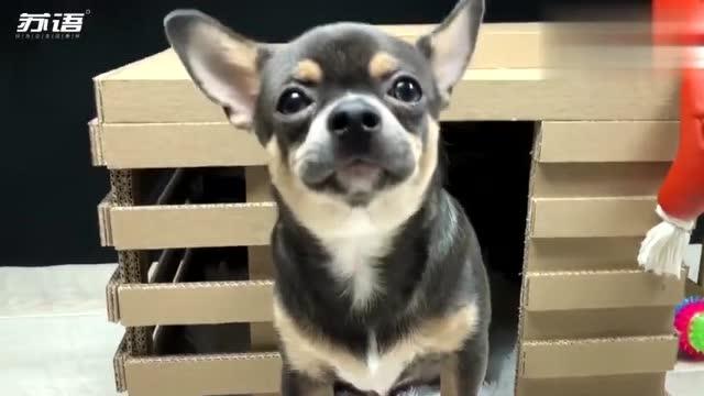 很简单,铲屎官教你用硬纸板为狗狗做一个小屋子,这狗狗太幸福了