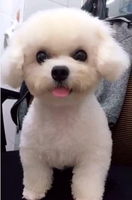 第一次见可爱的小狗在卖萌,可爱极了