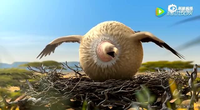 圆滚滚动物世界! 新浪视频
