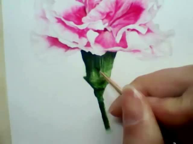 水彩画康乃馨绘画步骤快速视频